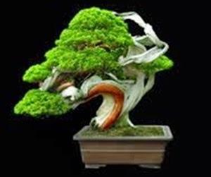 """<img src=""""Bonsai2.jpg"""" alt=""""foto bonsai"""">"""