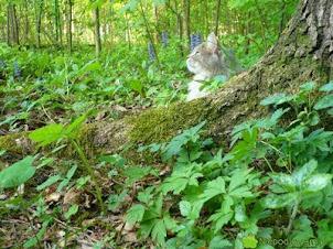 Zwierzaki - jakie rośliny zjadają i nic im nie jest