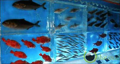 Aquarium beku