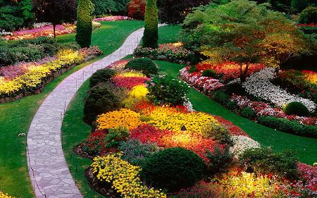 Foto Taman bunga