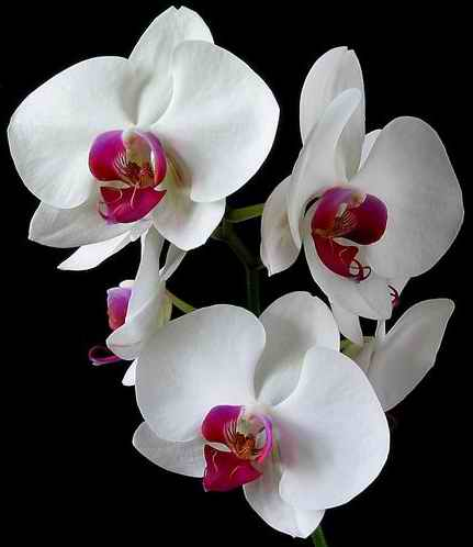 Orchids pictures