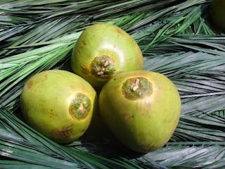 [Bild: gruene-kokosnuss+die+umsteiger.jpg]