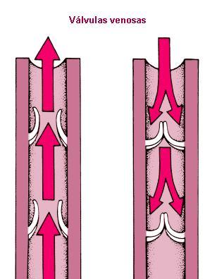venas varicosas 002