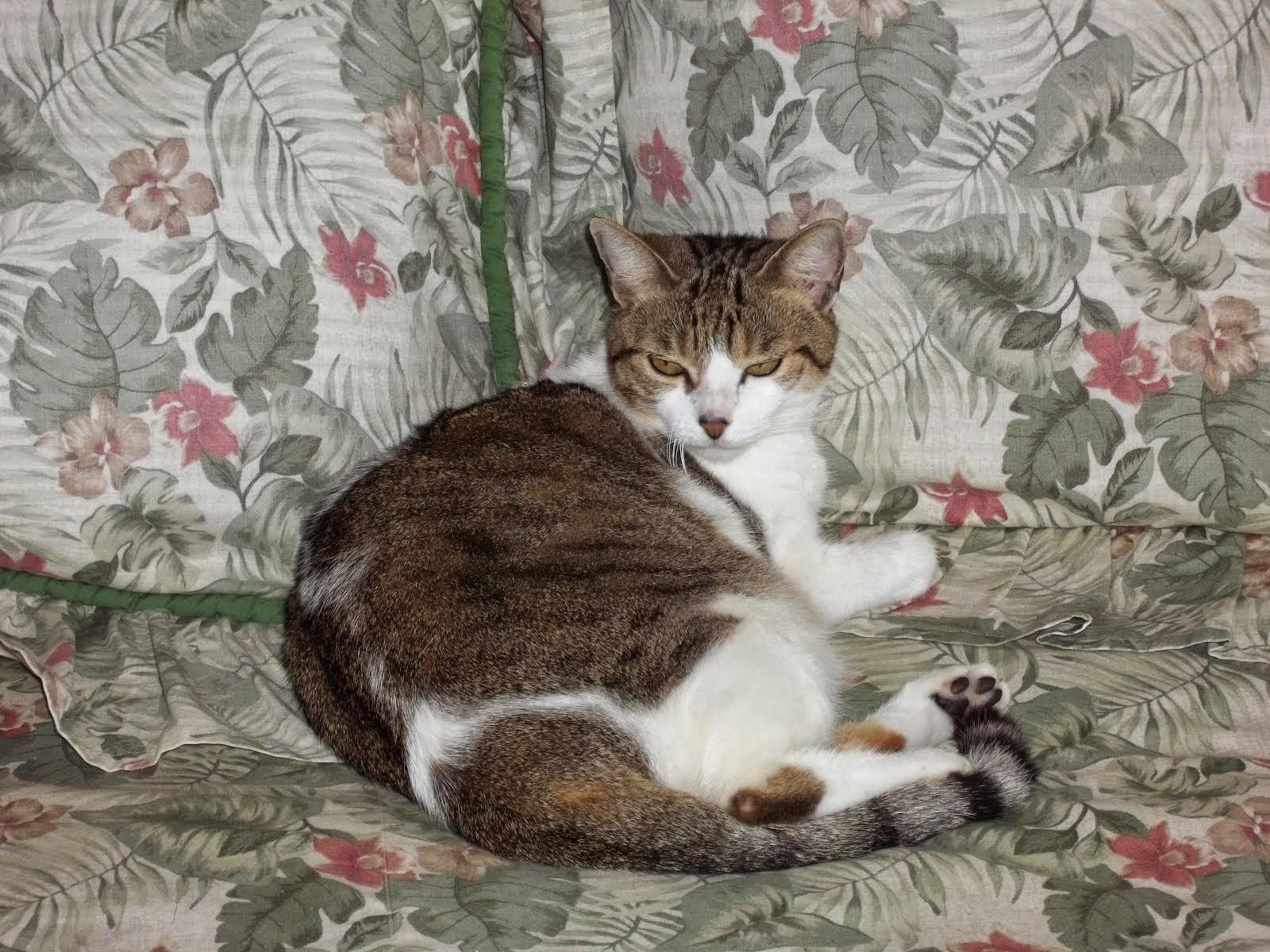 My Cat Missy