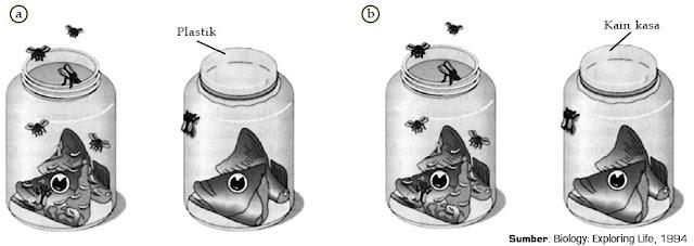 Francesco Redi merancang ulang percobaannya, untuk meyakinkan teorinya. Bentuk percobaannya yaitu penutup stoples pada percobaan pertama (a) digantikan menjadi kain kasa (b).