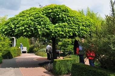 Los arboles los arboles for Arbre de jardin pour ombre