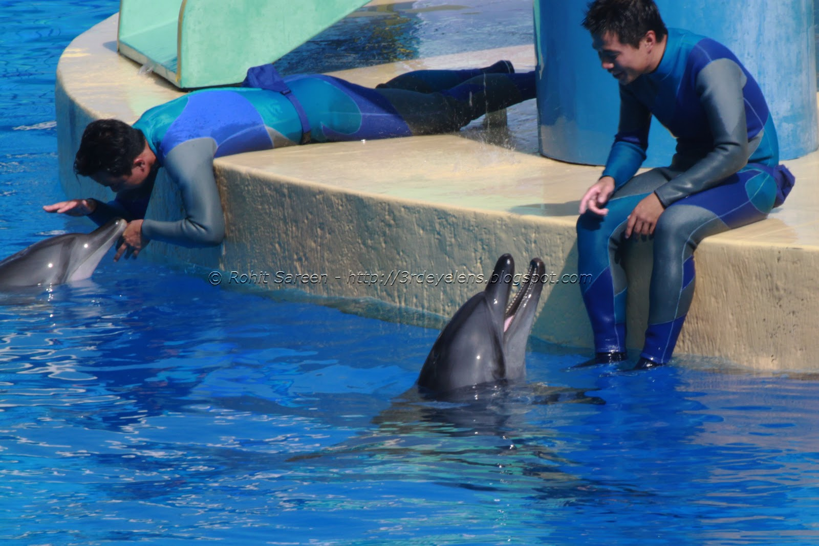 """dolphins in ocean park Hong kong activists have called on ocean park to phase out animal shows and artificial breeding as part of a global effort to end cetacean captivity """"ocean park has for years ignored criticism ."""