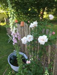 Älskade trädgård!