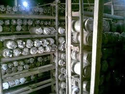 rak penyimpanan jamur tiram putih