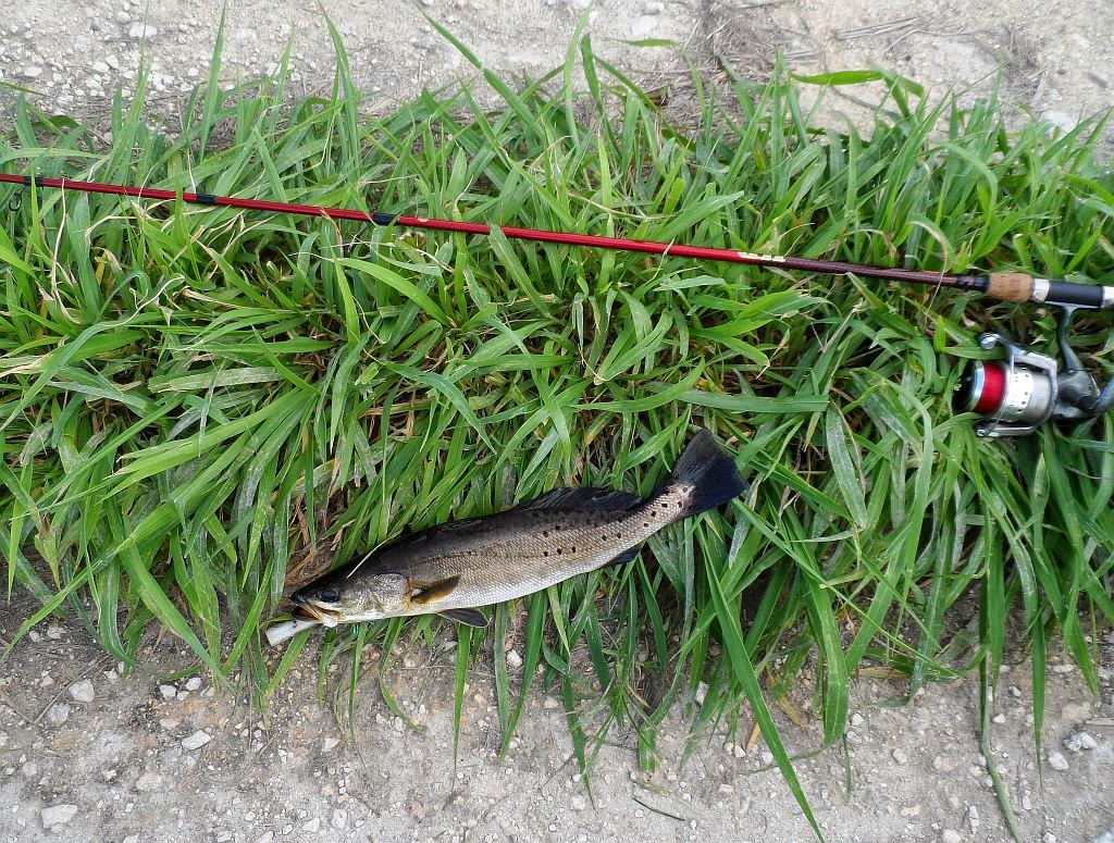 Mosquito lagoon indian river fishing playalinda beach for Whiting fish florida