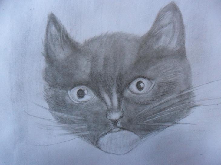 como desenhar gato arte vício
