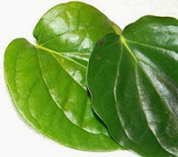 Betel leaf benefits for dental and oral health