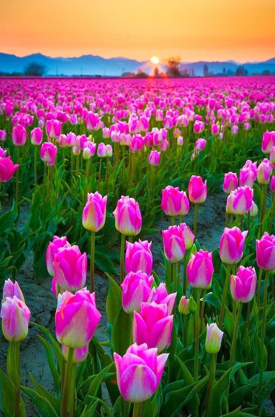Skagit Valley,USA: