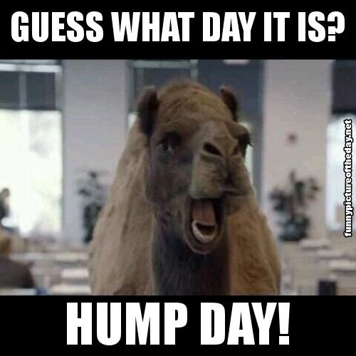 Happy Hump Day Meme Funny : Camel wednesday images with quotes quotesgram