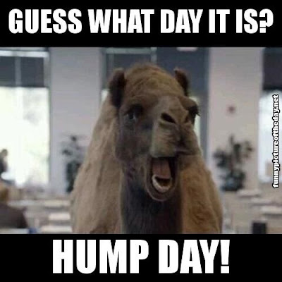 Guess What Day It Is Hump Day Funny Camel Geico Humor