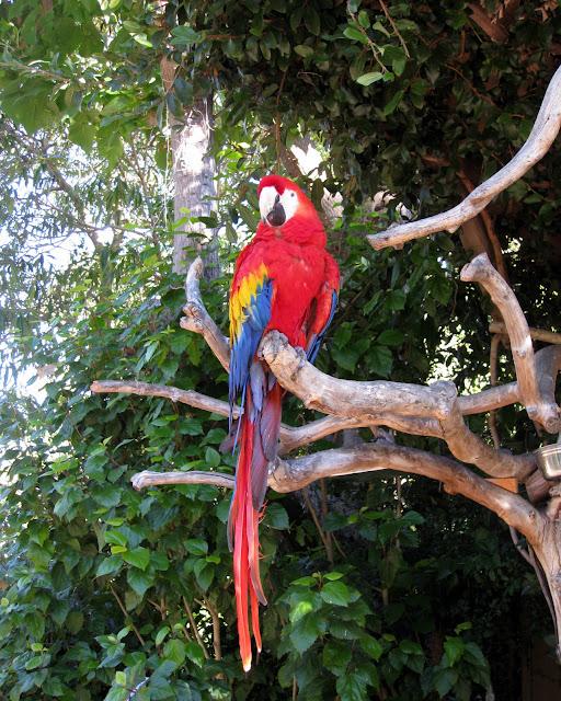 San Diego Zoo Macaw