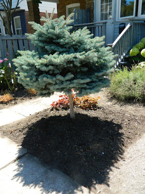 Leslieville Toronto front garden cleanup after Paul Jung Gardening Services