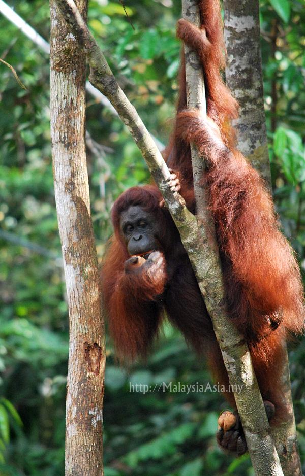 Orangutan Home Services Tucson
