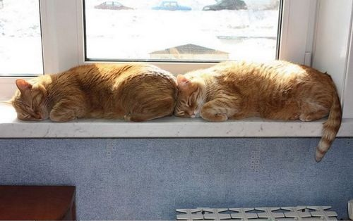Funny cat sleeps, funy cats, cat pictures