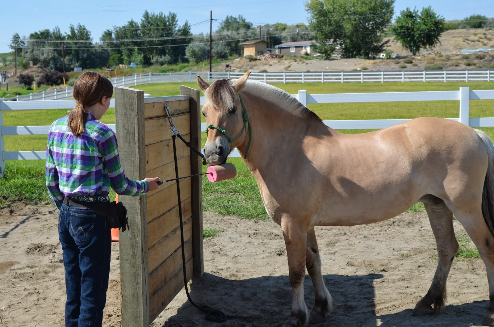 Clicker training a horse to target