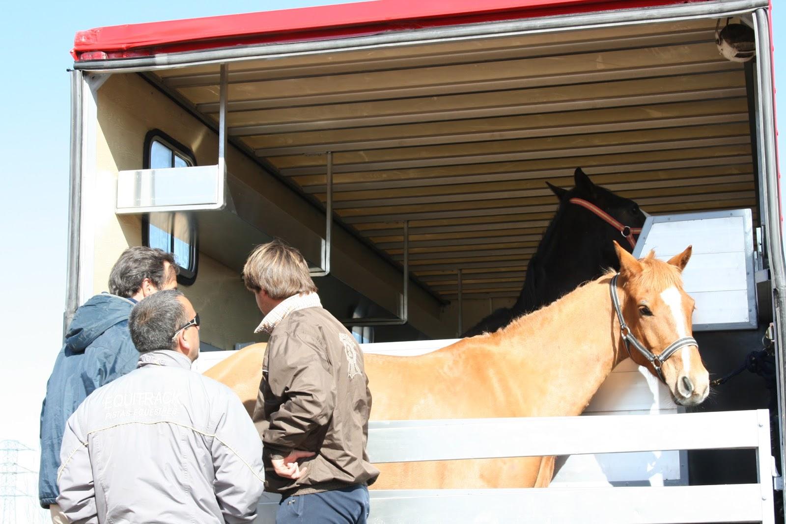 Galopejunior: Consejos para transportar al caballo