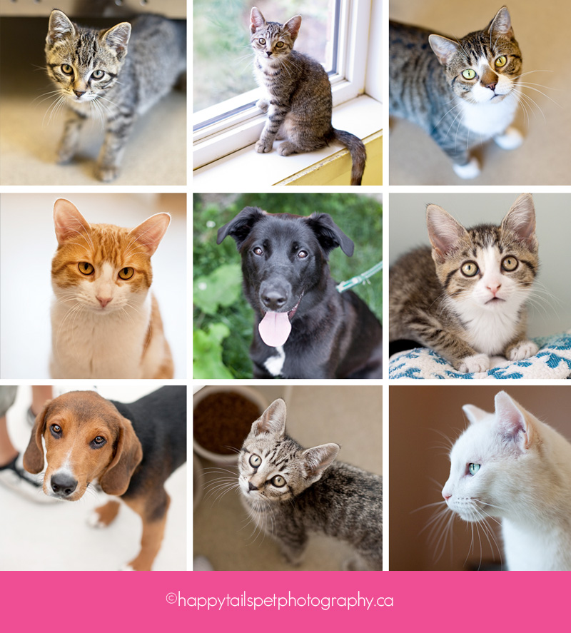 collage of shelter pets