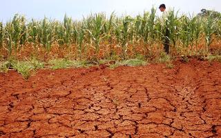 Seca causa muitas perdas e prejuízos à Região Sul
