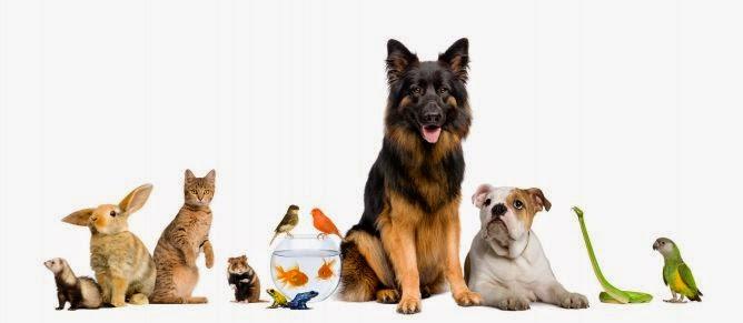 El Rincón de Nuestras Mascotas