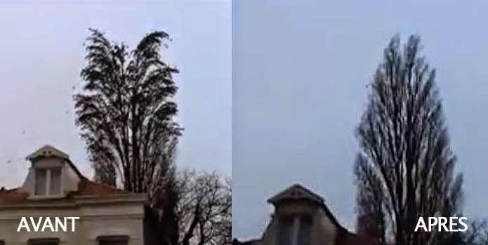 Des centaines d'oiseaux s'envolent de l'arbre.