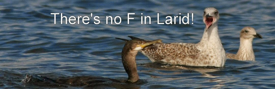 There's no F in Larid