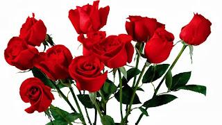 Manfaat bunga mawar bagi kulit wajah