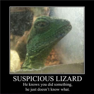 motivational suspicious lizard, motivational, motivational posters, suspicious lizard he knows you did something he just does not know what