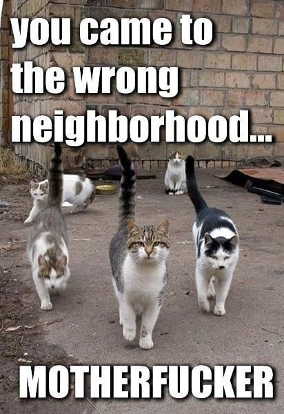 You%2BCame%2BTo%2BThe%2BWrong%2BNeighborhood%2B-%2BGangsta%2BCat.jpg