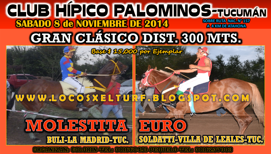 08-11-14-HIP. PALOMINOS-TUC.