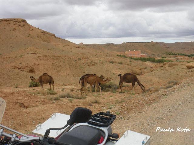Na Terra do Sol Poente - Viagem a solo por Marrocos - Página 2 IMGP0372