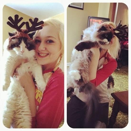 reindeer antler cats