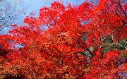 Beautiful Autumn Trees Photos hermosos arboles de oto
