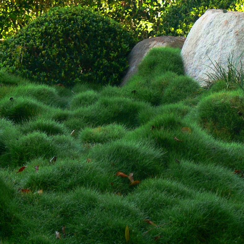 Ground cover thinking outside the boxwood for Mounding grass