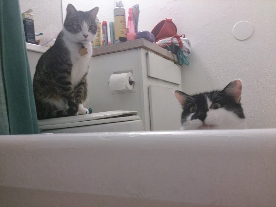 Funny cats - part 90 (40 pics + 10 gifs), two cats hanging around in the bathroom