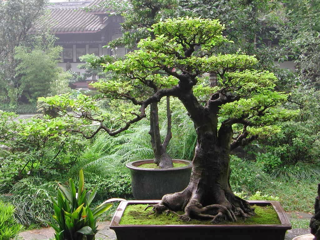 The Little Bonsai