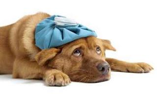 Ảnh minh họa. Chó bị tiêu chảy.
