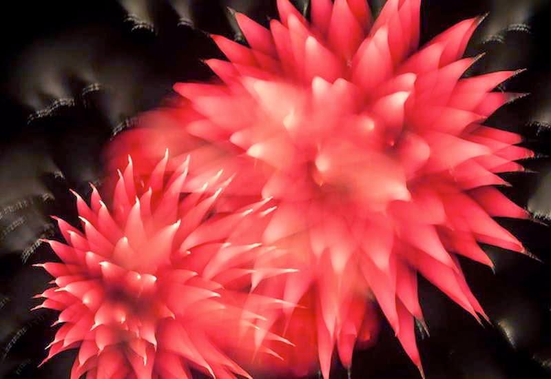 Pesta-Kembang-Api-7