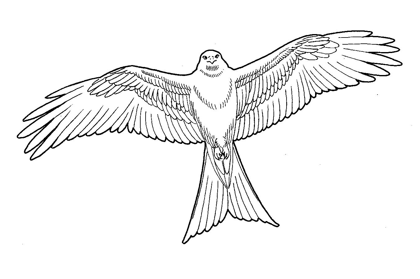 Line Drawing Kite : Mobile drawing of red kite birds sketch coloring page