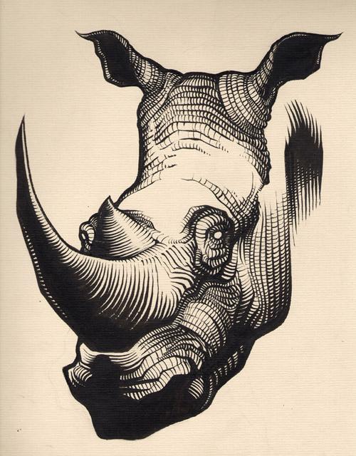 Rhinocéros (étape 1) by Regis Lagoeyte