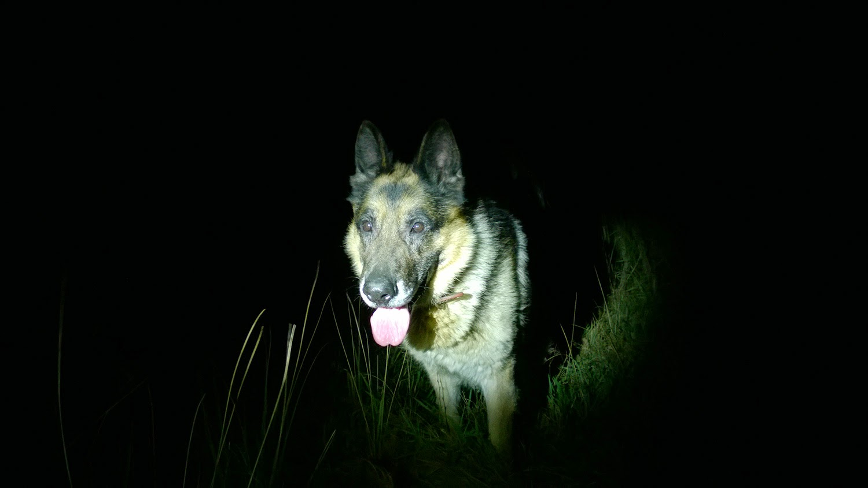 nocne bieganie z psem