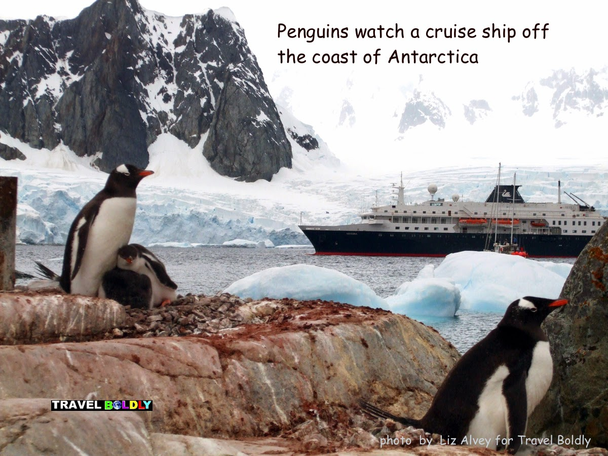 Penguin watch a cruise ship in Antarctica.  Photo: Liz Alvey for Travel Boldly