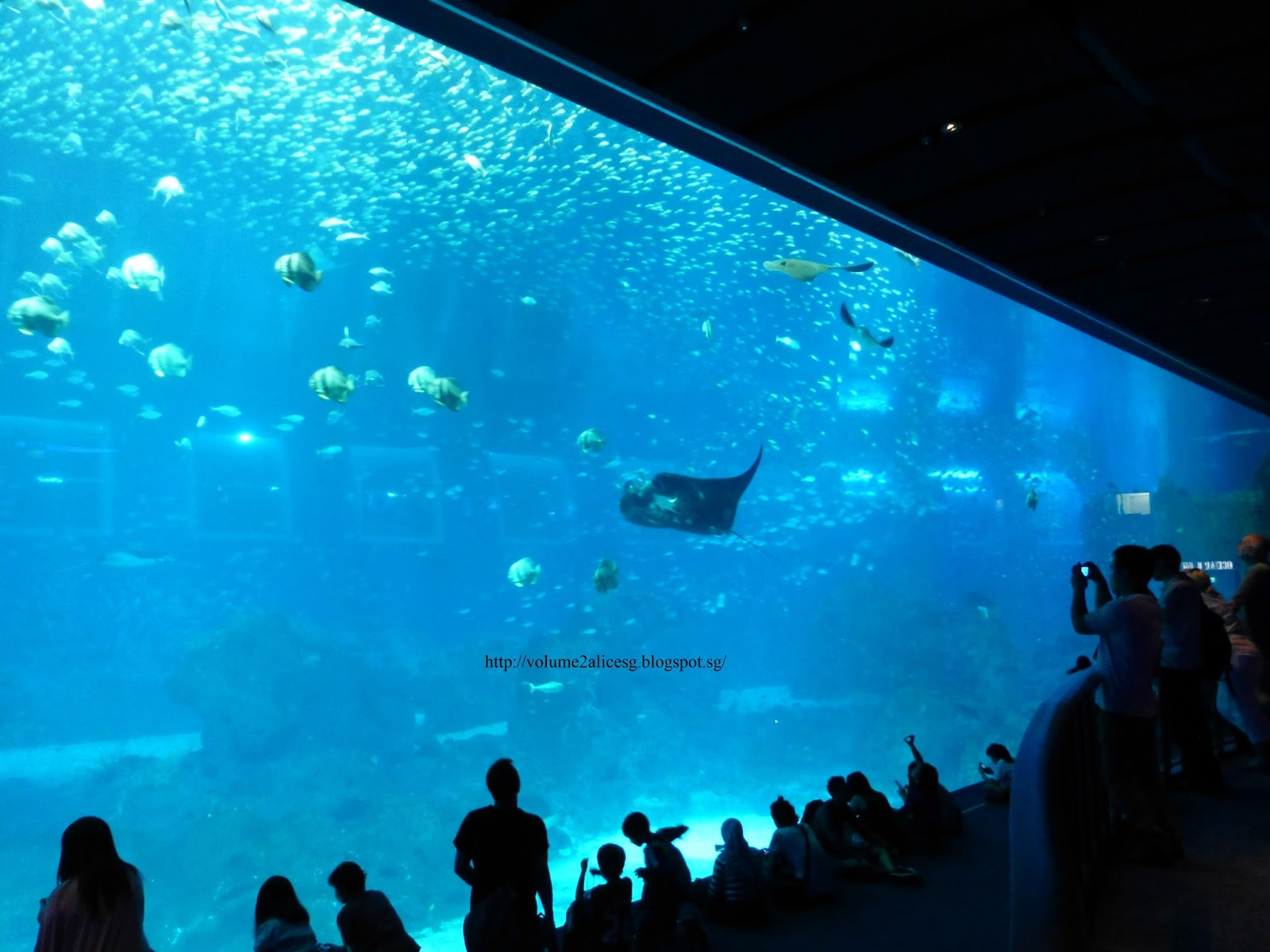 Alicesg Singaporemyhome My World Tuesday Sea Aquarium
