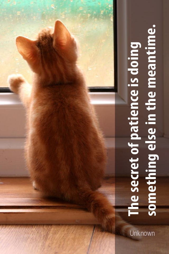 visual quote - image quotation for PATIENCE - The secret of patience is doing something else in the meanwhile. - Unknown