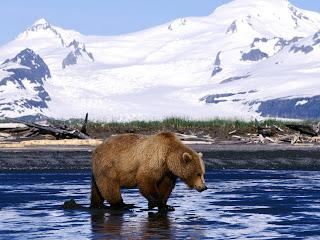 Bear Wallpaper