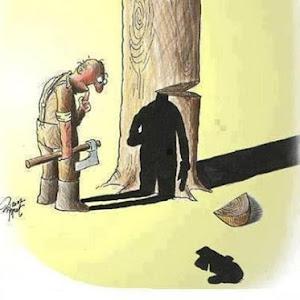 STOP CUT TREES!!!